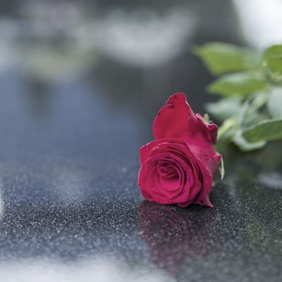 Religious tradition to put one flower in memory of the deceased on the granite slab of the grave in the cemetery, tragedy and sorrow for the loss of a loved one. Red rose was left on gravestone in the graveyard